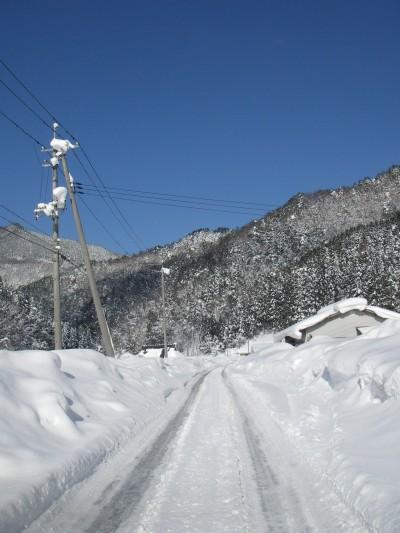 県民の森への道
