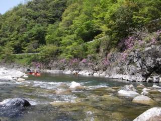 つつじと岩と清流の匹見川