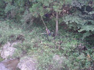ジャングル探検?!