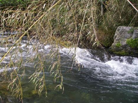 スズキの瀬の上の瀬