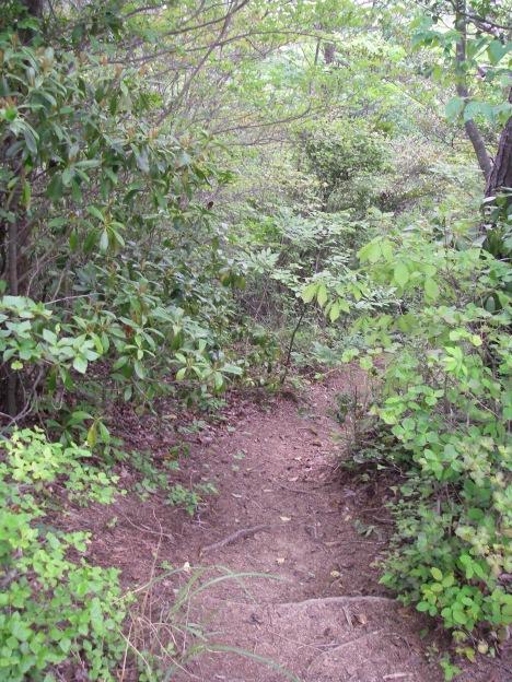 瓦小屋山への道