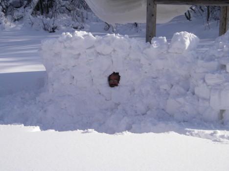 雪中くろさん