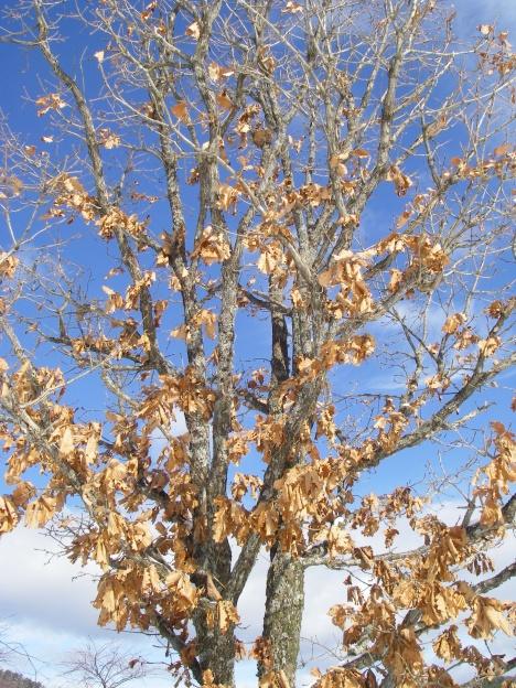枯れ木も花のにぎわい?