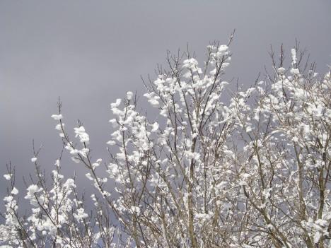 枯れ木の花