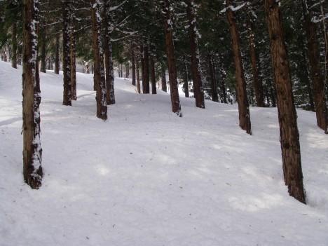 森林ショートカット