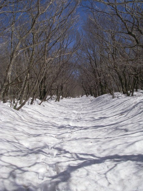 林のトンネル