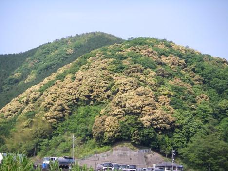 枯れ木が花