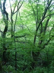 5/16 林道サイクリング