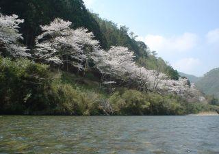 2005/04/09 南桑の桜